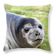 Woeful Weaner Throw Pillow by Ginny Barklow