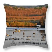 Wonderful Wetlands Throw Pillow by Al Powell Photography USA