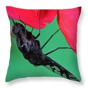 Xenox Tigrinus Throw Pillow by Juergen Roth