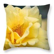 Yellow Rose Macro Throw Pillow by Carol Groenen