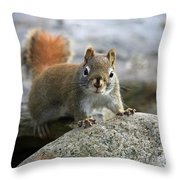 You Wanna Chat Throw Pillow by Deborah Benoit