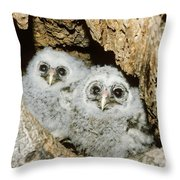 Young Barred Owls In Nest Snag Throw Pillow by Jim Zipp