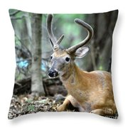 Young Buck At Rest Throw Pillow by Paul Ward