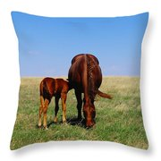 Young Colt And Mother Throw Pillow by Jeff Swan