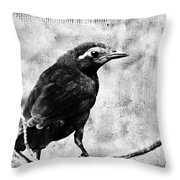 Young Grackle Throw Pillow by Cassie Peters