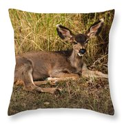 Young Mule Deer Throw Pillow by Robert Bales