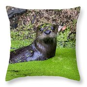 Young River Otter Egan's Creek Greenway Florida Throw Pillow by Dawna  Moore Photography