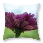 Zinnia Dream Throw Pillow by Sonali Gangane