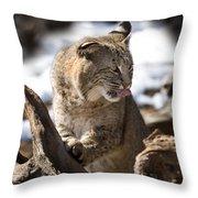 Bobcat Throw Pillow by Jeff Grabert