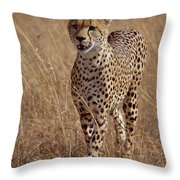 Cheetah Acinonyx Jubatus Portrait Throw Pillow by Gerry Ellis
