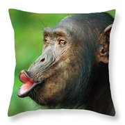 Chimpanzee Pan Troglodytes Adult Female Throw Pillow by Cyril Ruoso