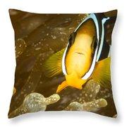Clarks Anemonefish Among An Anemones Throw Pillow by Tim Laman