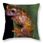 Clown Tree Frog Throw Pillow by Dante Fenolio