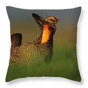 Greater Prairie Chicken Male Throw Pillow by Tim Fitzharris