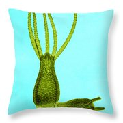 Hydra, Lm Throw Pillow by Omikron