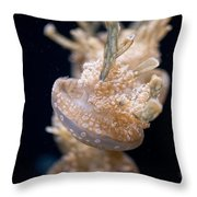 Jellies Throw Pillow by Carol Ailles