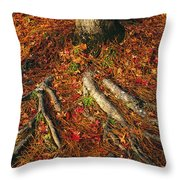 Oak Tree Roots And Pine Needles Throw Pillow by Raymond Gehman