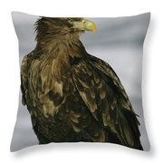 Portrait Of An Endangered White-tailed Throw Pillow by Tim Laman