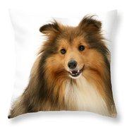 Sheltie Throw Pillow by Jane Burton