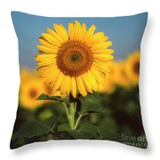 Sunflower Throw Pillow by Bernard Jaubert