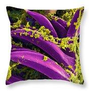 Yersinia Pestis Bacteria, Sem Throw Pillow by Science Source