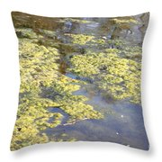 Algae Bloom In A Pond Throw Pillow by Photo Researchers, Inc.