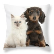 Blue-point Kitten & Dachshund Throw Pillow by Mark Taylor