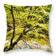 Fall Along Williams River Throw Pillow by Thomas R Fletcher