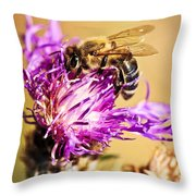 Honey Bee  Throw Pillow by Elena Elisseeva