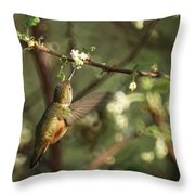Hummingbird Throw Pillow by Ernie Echols