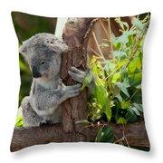 Koala Throw Pillow by Carol Ailles