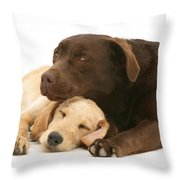 Labradoodle And Labrador Retriever Throw Pillow by Jane Burton