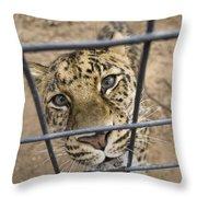 An Amur Leopard Panthera Pardus Throw Pillow by Joel Sartore
