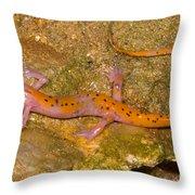 Cave Salamander Throw Pillow by Dante Fenolio