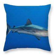 Gray Reef Shark, Kimbe Bay, Papua New Throw Pillow by Steve Jones