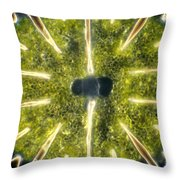 Micrasterias Throw Pillow by Michael Abbey and Photo Researchers