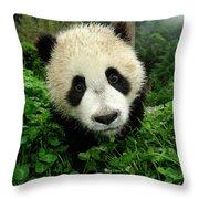 Giant Panda Ailuropoda Melanoleuca Throw Pillow by Katherine Feng