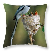 Madagascar Paradise Flycatcher Throw Pillow by Cyril Ruoso