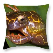 Clown Tree Frog Throw Pillow by Dante Fenolio