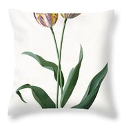 5 Tulip Tulip  Throw Pillow by Georg Dionysius Ehret