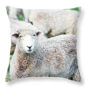 Sheeps Throw Pillow by MotHaiBaPhoto Prints
