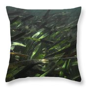 A Bed Of Sea Grass, Posidonia, Ripples Throw Pillow by Jason Edwards
