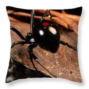 A Black Widow Spider Latrodectus Throw Pillow by George Grall