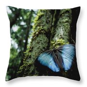 A Blue Morpho Butterfly Throw Pillow by Joel Sartore