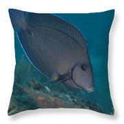 A Blue Tang Surgeonfish, Key Largo Throw Pillow by Terry Moore