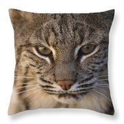 A Bobcat At The Rolling Hills Zoo Throw Pillow by Joel Sartore