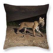 A Bobcat Crosses A Rio Grande Border Throw Pillow by Joel Sartore