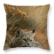 A Bobcat Throw Pillow by Norbert Rosing