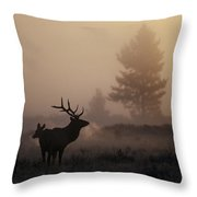 A Bull Elk Stands With Two Females Throw Pillow by Michael S. Quinton