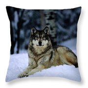 A Captive Grey Wolf, Canis Lupus Throw Pillow by Joel Sartore